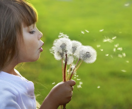 clear allergies with chiropractic
